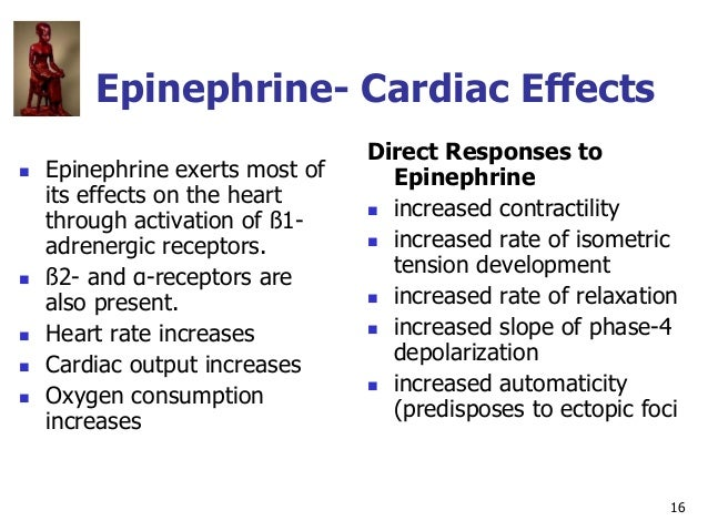 16 Epinephrine- Cardiac Effects  Epinephrine exerts most of its effects on the heart through activation of ß1- adrenergic...
