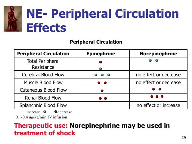 29 NE- Peripheral Circulation Effects Peripheral Circulation Peripheral Circulation Epinephrine Norepinephrine Total Perip...