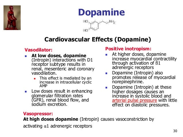 30 Dopamine Vasodilator:  At low doses, dopamine (Intropin) interactions with D1 receptor subtype results in renal, mesen...