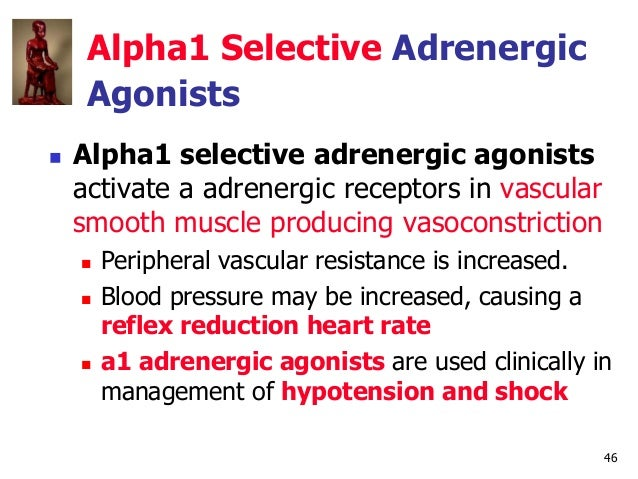 46 Alpha1 Selective Adrenergic Agonists  Alpha1 selective adrenergic agonists activate a adrenergic receptors in vascular...