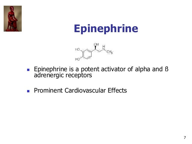 7 Epinephrine  Epinephrine is a potent activator of alpha and ß adrenergic receptors  Prominent Cardiovascular Effects