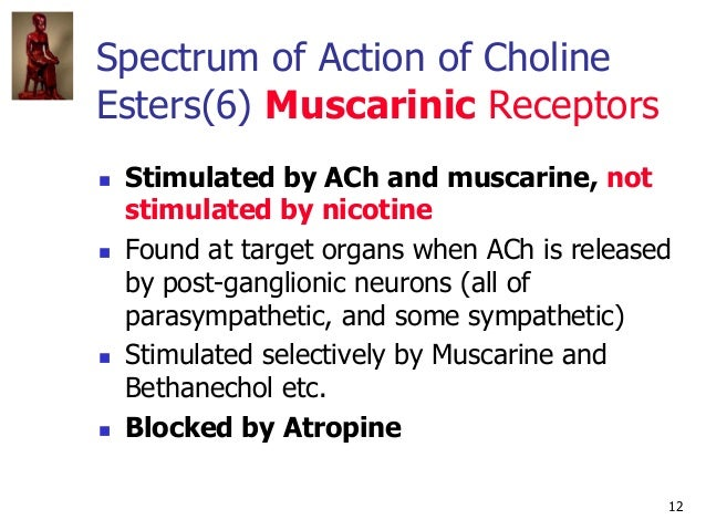 12 Spectrum of Action of Choline Esters(6) Muscarinic Receptors  Stimulated by ACh and muscarine, not stimulated by nicot...