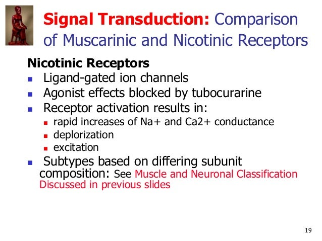 19 Signal Transduction: Comparison of Muscarinic and Nicotinic Receptors Nicotinic Receptors  Ligand-gated ion channels ...