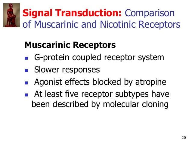 20 Signal Transduction: Comparison of Muscarinic and Nicotinic Receptors Muscarinic Receptors  G-protein coupled receptor...