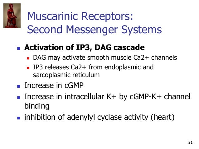 21 Muscarinic Receptors: Second Messenger Systems  Activation of IP3, DAG cascade  DAG may activate smooth muscle Ca2+ c...