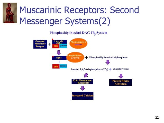 22 Muscarinic Receptors: Second Messenger Systems(2)