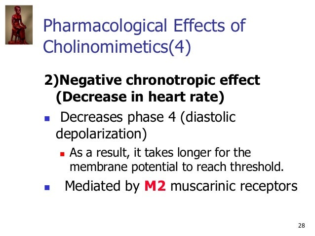 28 Pharmacological Effects of Cholinomimetics(4) 2)Negative chronotropic effect (Decrease in heart rate)  Decreases phase...