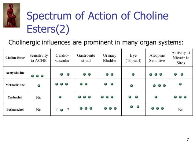 7 Spectrum of Action of Choline Esters(2) Cholinergic influences are prominent in many organ systems: Choline Ester Sensit...
