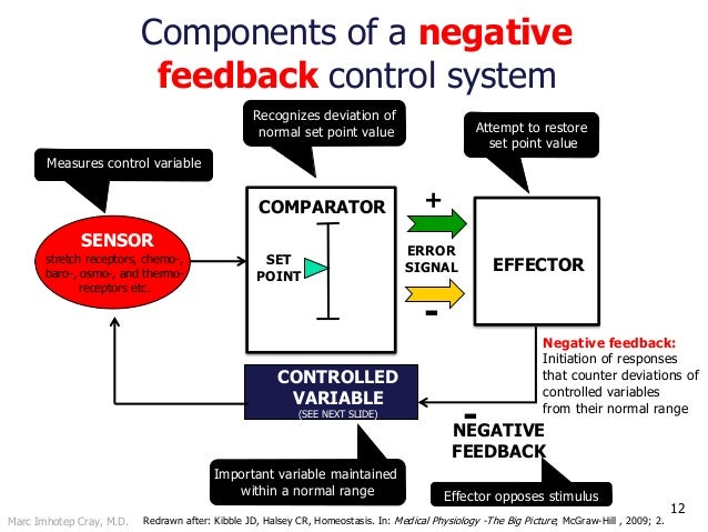 Marc Imhotep Cray, M.D. 12 ERROR SIGNAL COMPARATOR SET POINT + - CONTROLLED VARIABLE (SEE NEXT SLIDE) SENSOR EFFECTOR -NEG...