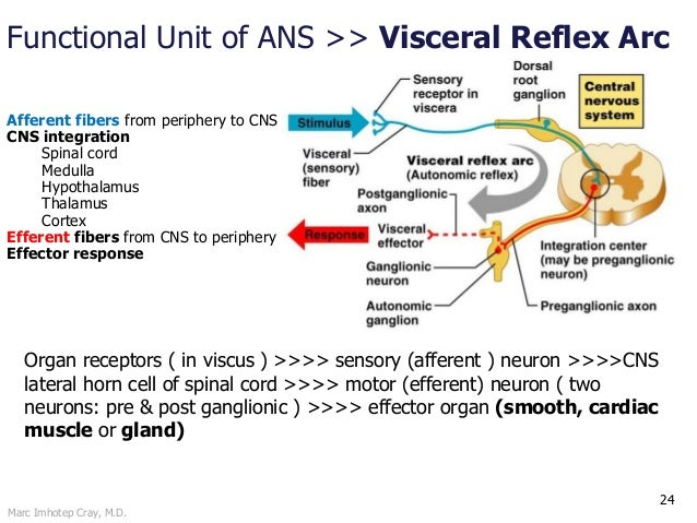 Ans pharmacology intro to the autonomic nervous system 24 ccuart Gallery