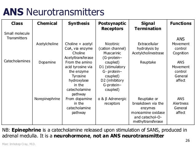 Marc Imhotep Cray, M.D. ANS Neurotransmitters 26 Class Small molecule Transmitters Catecholamines Chemical Acetylcholine D...
