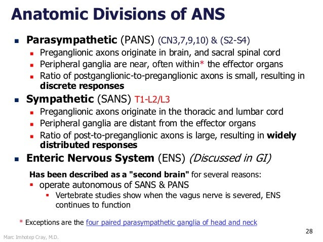 Marc Imhotep Cray, M.D. 28 Anatomic Divisions of ANS  Parasympathetic (PANS) (CN3,7,9,10) & (S2-S4)  Preganglionic axons...