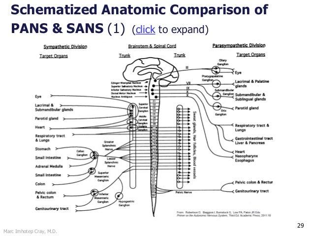 Marc Imhotep Cray, M.D. 29 Schematized Anatomic Comparison of PANS & SANS (1) (click to expand)