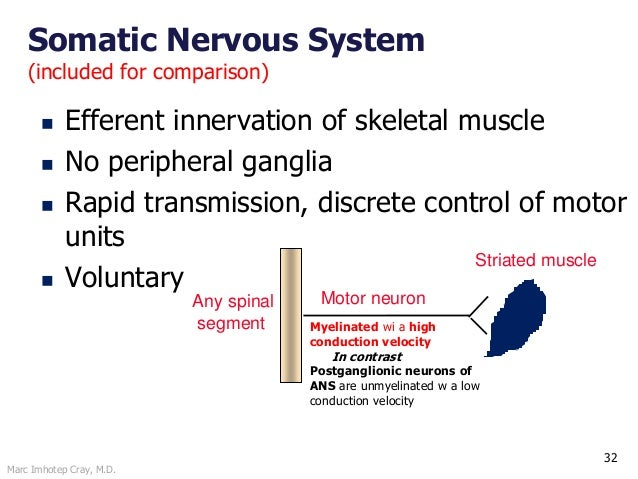 Marc Imhotep Cray, M.D. 32 Somatic Nervous System (included for comparison)  Efferent innervation of skeletal muscle  No...