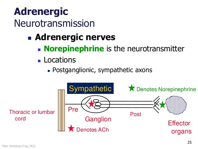Marc Imhotep Cray, M.D. 35 Adrenergic Neurotransmission  Adrenergic nerves  Norepinephrine is the neurotransmitter  Loc...