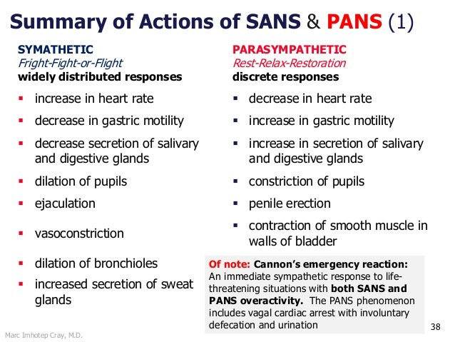 Marc Imhotep Cray, M.D. 38 Summary of Actions of SANS & PANS (1) SYMATHETIC Fright-Fight-or-Flight widely distributed resp...