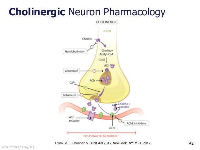 Marc Imhotep Cray, M.D. Cholinergic Neuron Pharmacology 42From Le T., Bhushan V. First Aid 2017. New York, NY: M-H. 2017.