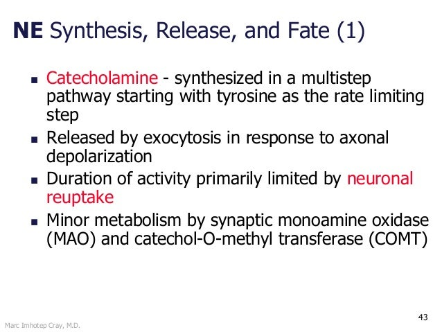 Marc Imhotep Cray, M.D. 43 NE Synthesis, Release, and Fate (1)  Catecholamine - synthesized in a multistep pathway starti...
