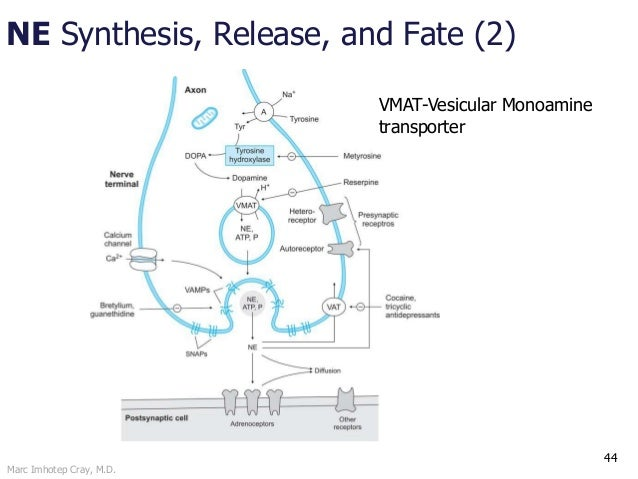 Marc Imhotep Cray, M.D. NE Synthesis, Release, and Fate (2) 44 VMAT-Vesicular Monoamine transporter