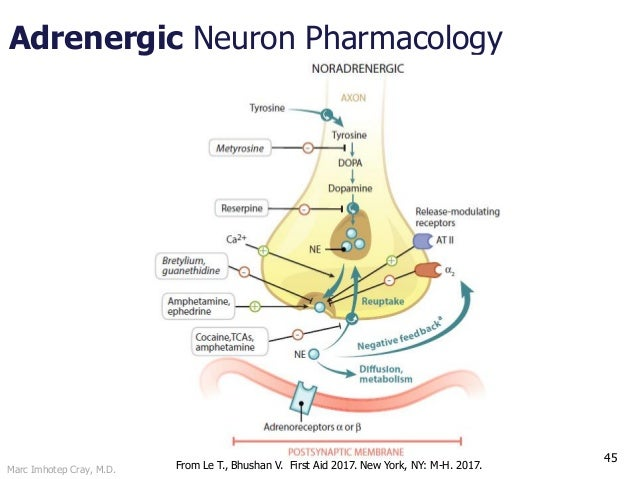 Marc Imhotep Cray, M.D. Adrenergic Neuron Pharmacology 45 From Le T., Bhushan V. First Aid 2017. New York, NY: M-H. 2017.