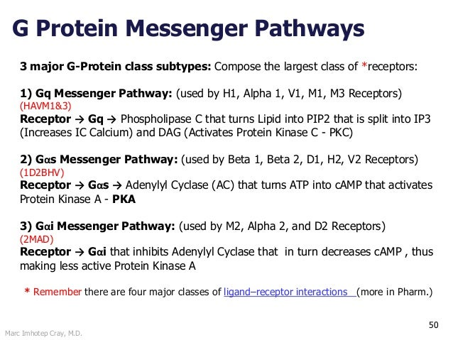 Marc Imhotep Cray, M.D. 50 3 major G-Protein class subtypes: Compose the largest class of *receptors: 1) Gq Messenger Path...