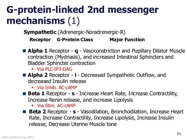Marc Imhotep Cray, M.D. 51 Sympathetic (Adrenergic-Noradrenergic-R) Alpha 1 Receptor - q - Vasoconstriction and Pupillary ...