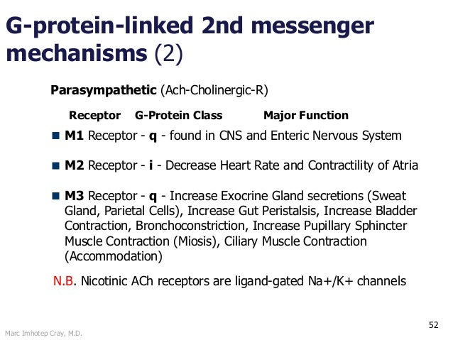Marc Imhotep Cray, M.D. 52 G-protein-linked 2nd messenger mechanisms (2) Parasympathetic (Ach-Cholinergic-R) M1 Receptor -...
