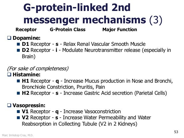 Marc Imhotep Cray, M.D. 53 G-protein-linked 2nd messenger mechanisms (3)  Dopamine: D1 Receptor - s - Relax Renal Vascula...