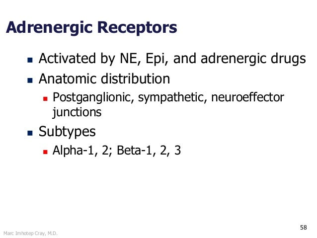 Marc Imhotep Cray, M.D. 58 Adrenergic Receptors  Activated by NE, Epi, and adrenergic drugs  Anatomic distribution  Pos...