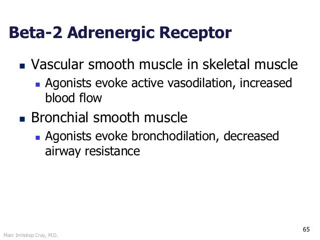 Marc Imhotep Cray, M.D. 65 Beta-2 Adrenergic Receptor  Vascular smooth muscle in skeletal muscle  Agonists evoke active ...