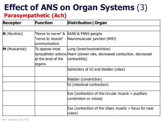 Marc Imhotep Cray, M.D. Effect of ANS on Organ Systems (3) Parasympathetic (Ach) Receptor Function Distribution Organ N (N...