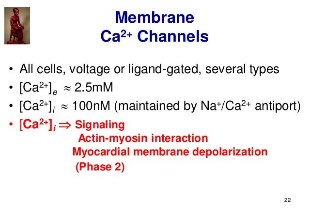 22 Membrane Ca2+ Channels • All cells, voltage or ligand-gated, several types • [Ca2+]e  2.5mM • [Ca2+]i  100nM (maintai...