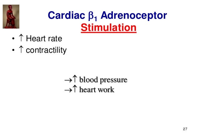27 Cardiac 1 Adrenoceptor Stimulation •  Heart rate •  contractility  blood pressure  heart work