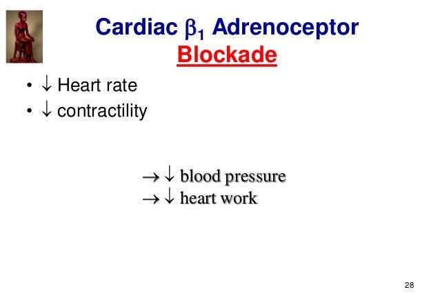 28 Cardiac 1 Adrenoceptor Blockade •  Heart rate •  contractility   blood pressure   heart work