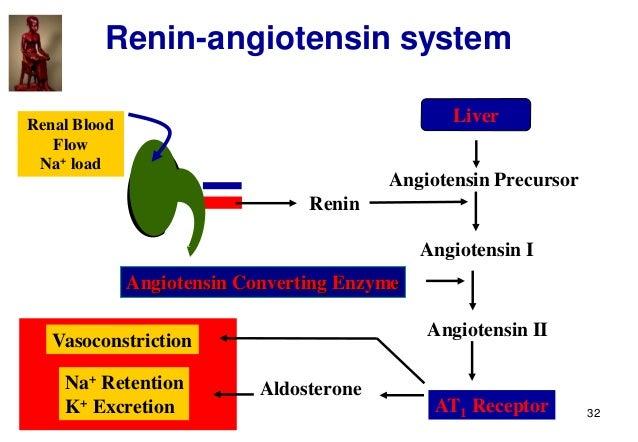 32 Renin-angiotensin system Renin Liver Angiotensin Precursor Angiotensin I Angiotensin II Angiotensin Converting Enzyme A...