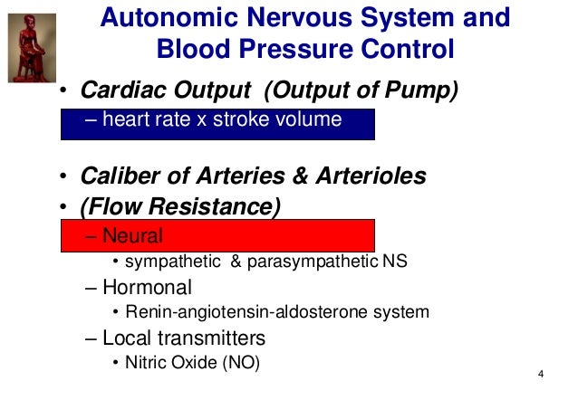 4 Autonomic Nervous System and Blood Pressure Control • Cardiac Output (Output of Pump) – heart rate x stroke volume • Cal...