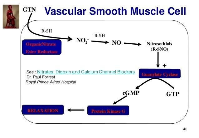 46 GTN NO2 - OrganicNitrate Ester Reductase R-SH R-SH NO Nitrosothiols (R-SNO) Guanylate Cyclase + GTPcGMP Protein Kinase ...