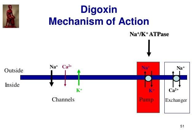 51 Digoxin Mechanism of Action Outside Inside Na+ K+ Na+ Ca2+ Na+ Pump ExchangerChannels Ca2+ K+ Na+/K+ ATPase
