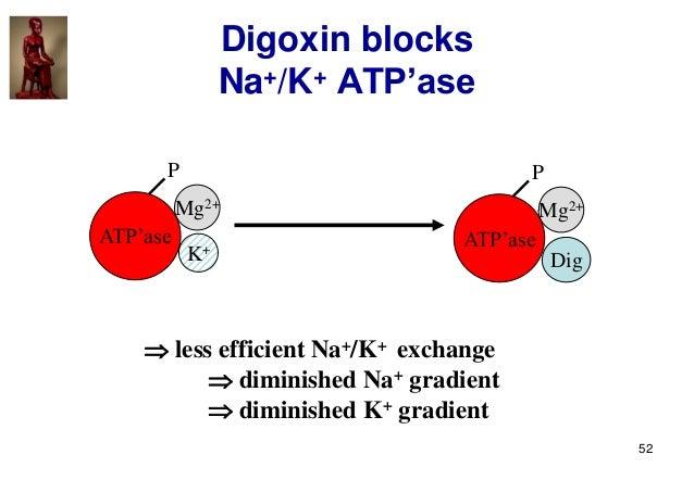 52 Digoxin blocks Na+/K+ ATP'ase ATP'ase P Mg2+ K+ ATP'ase P Mg2+ Dig  less efficient Na+/K+ exchange  diminished Na+ gr...
