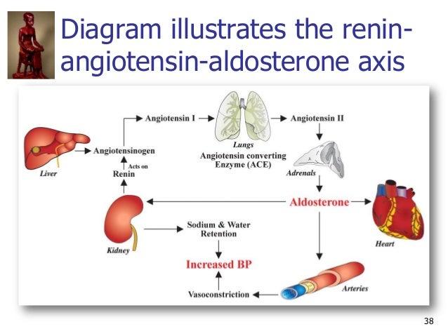 38 Diagram illustrates the renin- angiotensin-aldosterone axis
