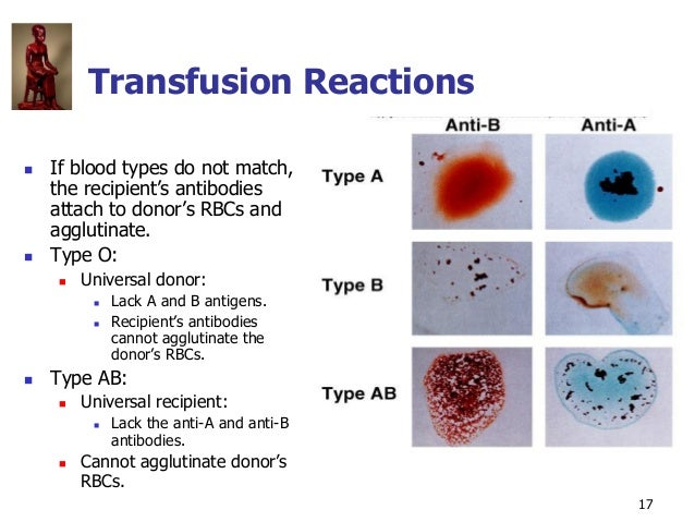 Copyright © The McGraw-Hill Companies, Inc. Permission required for reproduction or display. 17 Transfusion Reactions  If...
