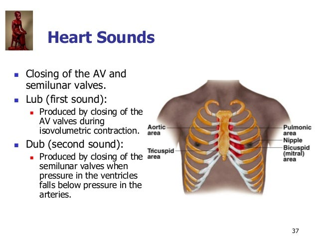 Copyright © The McGraw-Hill Companies, Inc. Permission required for reproduction or display. 37 Heart Sounds  Closing of ...