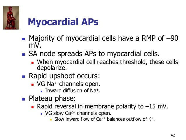Copyright © The McGraw-Hill Companies, Inc. Permission required for reproduction or display. 42 Myocardial APs  Majority ...
