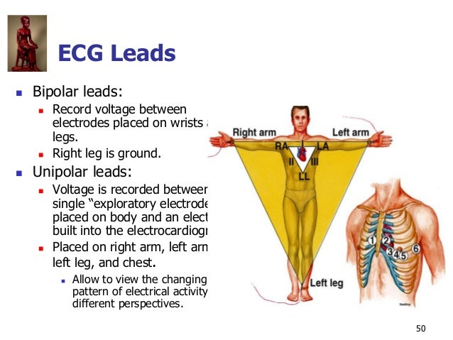 Copyright © The McGraw-Hill Companies, Inc. Permission required for reproduction or display. 50 ECG Leads  Bipolar leads:...