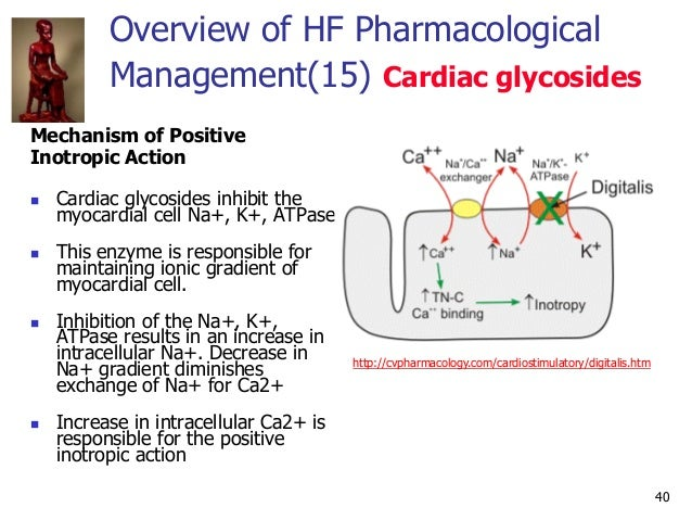 40 Overview of HF Pharmacological Management(15) Cardiac glycosides Mechanism of Positive Inotropic Action  Cardiac glyco...