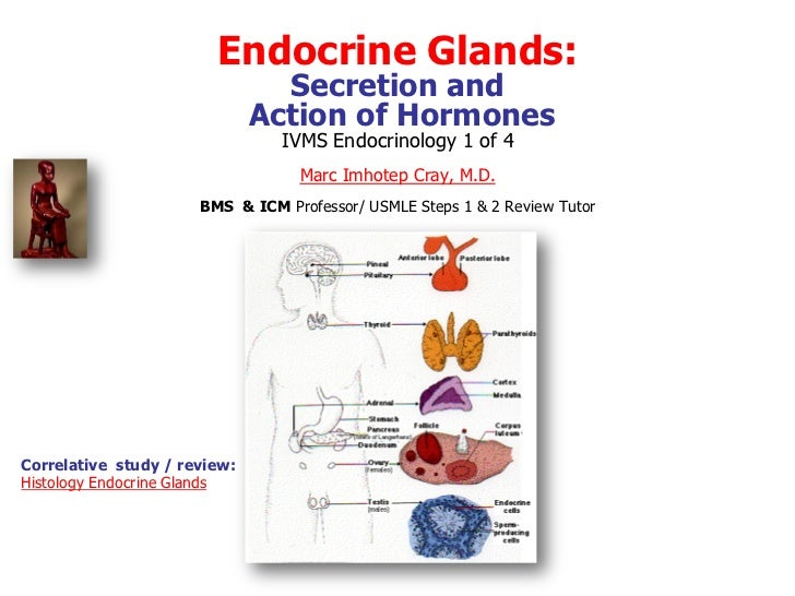 Endocrine Glands:                                Secretion and                              Action of Hormones            ...