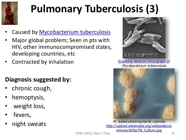 Pulmonary Tuberculosis (3) • Caused by Mycobacterium tuberculosis • Major global problem; Seen in pts with HIV, other immu...