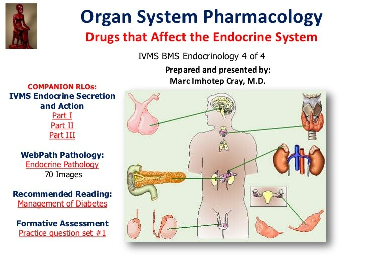Organ System Pharmacology                   Drugs that Affect the Endocrine System                             IVMS BMS En...