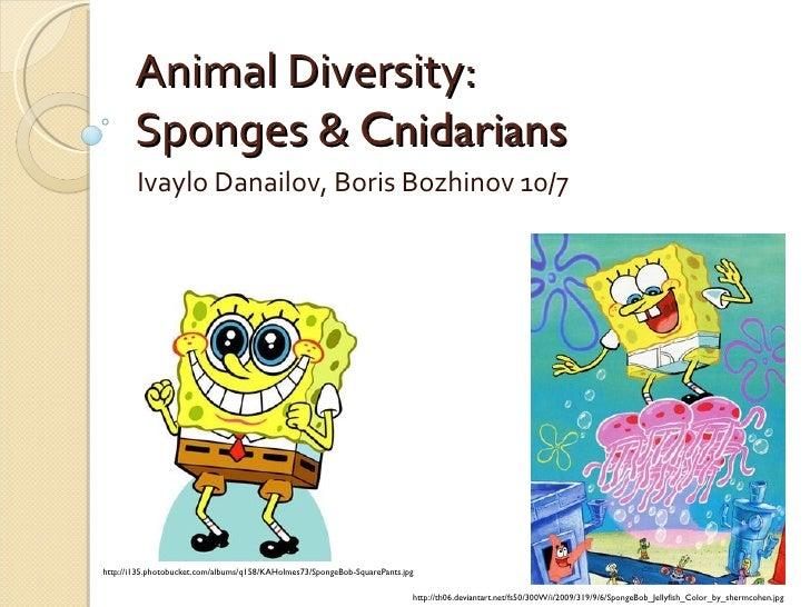 Animal Diversity: Sponges &  Cnidarians  Ivaylo Danailov, Boris Bozhinov 10/7 http://i135.photobucket.com/albums/q158/KAHo...