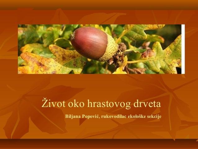 Život oko hrastovog drveta     Biljana Popović, rukovodilac ekološke sekcije